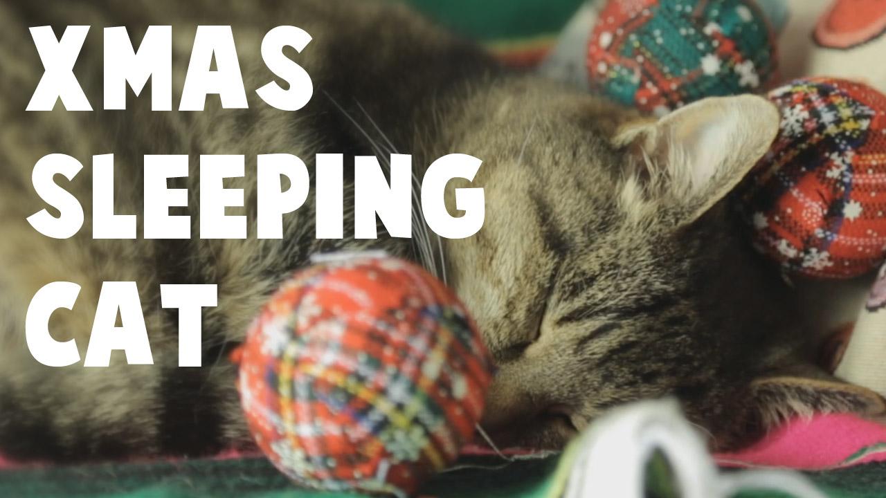 Xmas-sleeping-Cat-THUMB